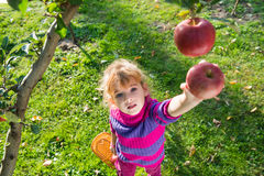 Girl picked apples Stock Photography