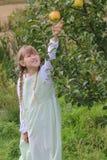 Girl picking apple royalty free stock image