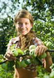 Girl is picking apples Stock Image