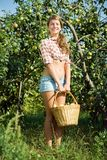 Girl is picking apples Stock Photography