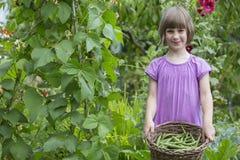 Girl Picking Beans In Vegetable Garden Stock Image