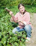 Girl picking  beet  in field Stock Photos