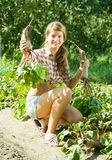 Girl is picking  beetroot Royalty Free Stock Photos