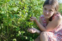Girl picking black currant in the field Stock Photos