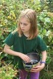 Girl picking blackberries Stock Photos