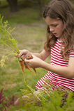 Girl picking carrots out of vegetable garden Stock Photos