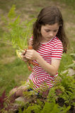 Girl picking carrots out of vegetable garden Royalty Free Stock Photo