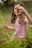 Girl picking carrots in vegetable garden Stock Images