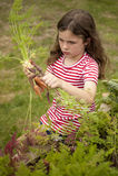 Girl picking carrots in vegetable garden Stock Photos