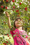 Girl picking cherries Royalty Free Stock Images