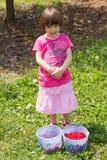 Girl picking cherries Stock Photos
