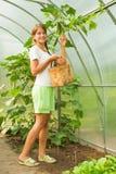 Girl is picking cucumber