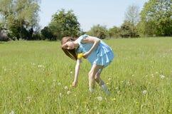 Girl picking dandelions Royalty Free Stock Image