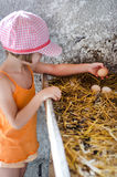 Girl picking eggs Stock Photos