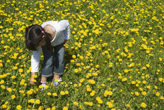 Girl picking flowers. In yellow spring meadow Stock Photos