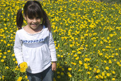 Girl picking flowers. In yellow spring meadow Stock Photography
