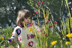 Girl picking flowers. Young girl picking wild flowers Royalty Free Stock Image