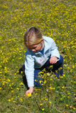 Girl picking flowers. A cute little blond Caucasian girl child picking yellow dandelion daisies on a green flower field in springtime holidays outdoors Royalty Free Stock Image