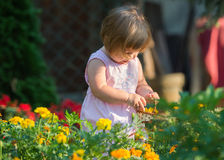 Girl picking flowers. Beautiful baby girl picking flowers from the garden Royalty Free Stock Photos