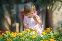 Girl picking flowers. Beautiful baby girl picking flowers from the garden Stock Image