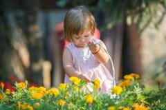 Girl picking flowers Stock Image