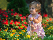 Girl picking flowers. Beautiful baby girl picking flowers from the garden Stock Images