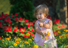 Girl picking flowers. Beautiful baby girl picking flowers from the garden Stock Photography