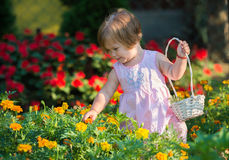Girl picking flowers Royalty Free Stock Photo
