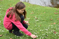 Girl picking flowers. Cute teenager girl picking daisy flowers Royalty Free Stock Photos
