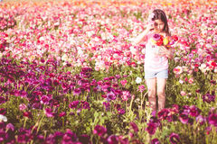 Girl picking flowers in a field. royalty free stock image