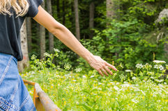 Girl picking flowers. In the field, by the forest Stock Photography