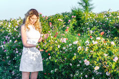 Girl picking flowers in a field of roses. Springtime green garden. Young woman white dress with beautiful long curled hair. Warm light Royalty Free Stock Photo
