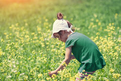 Girl picking flowers on the meadow Royalty Free Stock Images