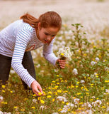 Girl picking flowers. Natural light portrait of a girl picking flowers Royalty Free Stock Images