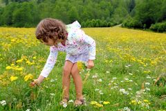 Girl picking flowers in yellow spring meadow. Beautiful scenic in Pyrenees spain Stock Photos