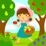 Girl picking fruit Royalty Free Stock Image