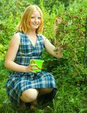 Girl  picking gooseberry Royalty Free Stock Images