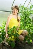 Girl picking  green peppe Stock Image