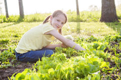 Girl picking lettuce for salad Royalty Free Stock Photo