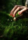 Girl picking mushrooms in the forest. Female hand picking mushrooms in the forest Stock Photos