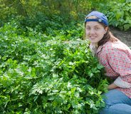 Girl picking parsley  in field Stock Photos