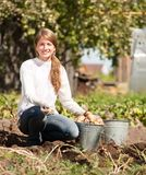 Girl picking  potato Royalty Free Stock Images