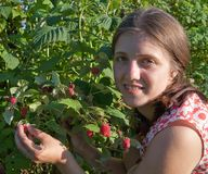 Girl picking raspberry in the field Royalty Free Stock Photo