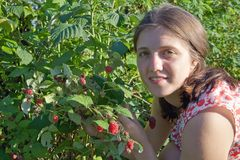 Girl picking raspberry in the field Stock Photos