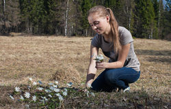 A girl picking snowdrops. Girl sunny spring day, picking flowers in the meadow Stock Images