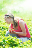 Girl picking strawberries Stock Image