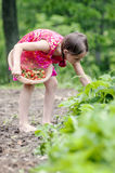 Girl picking strawberries Stock Images