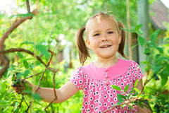 Girl is picking sweetberies from the bushes Stock Photography