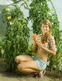 Girl picking tomato Royalty Free Stock Photos