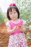 Girl picking tomatoes in farm Stock Photo